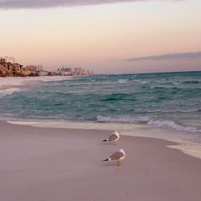 Destination Destin by Brenda Shoemake - Landscapes Beaches
