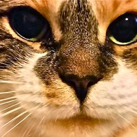 { Snoopy's Evil Eye ~ 6 July }  by Jeffrey Lee - Animals - Cats Portraits ( { snoopy's evil eye ~ 6 july } )
