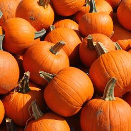 Pumpkins for sale by Krista Skarin - Artistic Objects Still Life ( orange, fallpumpkins, lincolnnebraska, kristasphotography, pumpkins, orangepumpkins )