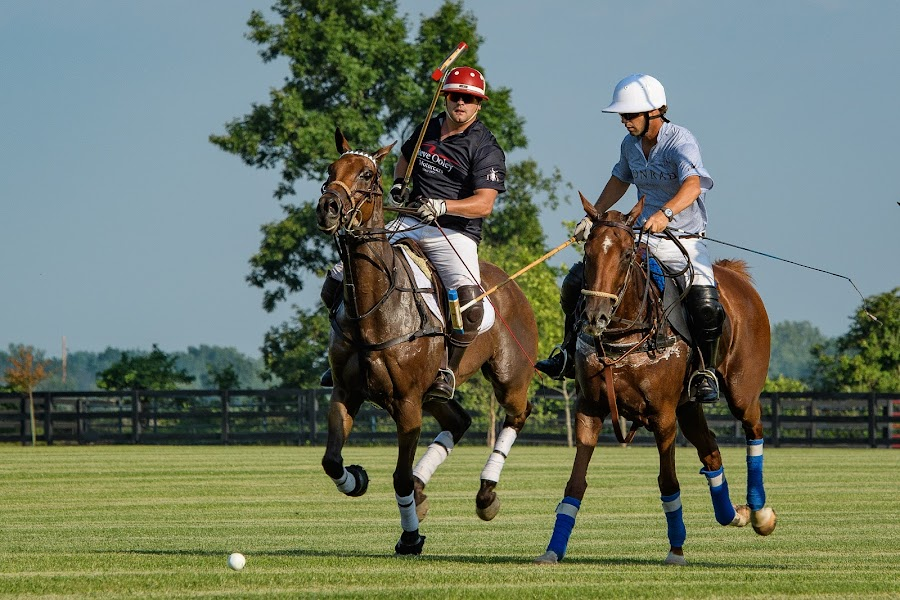 Polo Match by Dennis McClintock - Sports & Fitness Other Sports ( horseback, rider, polo match, horses, indiana )