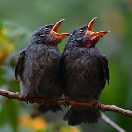 by Ajar Setiadi - Animals Birds