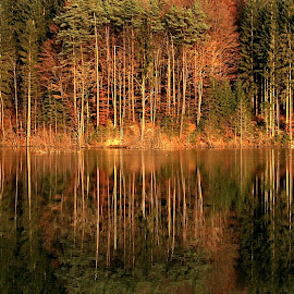 forest lake reflection by Bernarda Bizjak - City,  Street & Park  City Parks