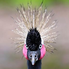 My precious hair... by Bop Aurelio - Animals Birds ( bird, nature, indonesia, pwctaggedbirds, animal )