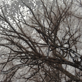 summer snow by Edward Gold - Digital Art Things ( digital photography, tree, brown, scenic, grey )