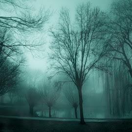 The nostalgic late night fog by Shirshendu Sengupta - Landscapes Prairies, Meadows & Fields ( mountains, nature, relax, switzerland, lake, travel, landscape, jungfrau, tranquil, relaxing, tranquility )