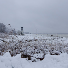 Ocean Observatory in Winter Storm by Kristine Nicholas - Novices Only Landscapes ( stormy, icy, snowstorm, waterscape, snow storm, ocean, house, architecture, frozen, storm, landscape, pilings, grasses, tree, cold, ice, snow, bush, weather, pier, wet, branches, water, building, wires, grass, snowy, sea, seascape, snowing, winter, bushes, trees, branch, brush )