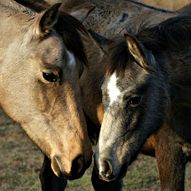 Mother Daughter by Gaylord Mink - Animals Horses ( mother, heads, horse, eyes )