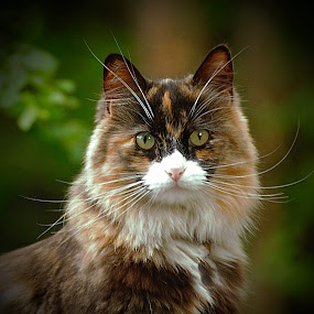 by Bente Agerup - Animals - Cats Portraits ( cats, nature, pets, animales, portrait )