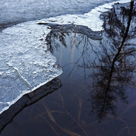 Multi Level by Mark Mynott - Nature Up Close Water ( water, natural light, winter, reflections, nature up close, new hampshire, depth, shadows )