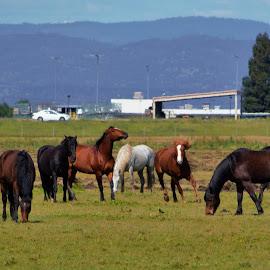 Spring Fling by Reda D - Animals Horses ( field, horses, grazing, horse, running,  )