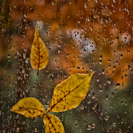 Autumn Rain  6587 by Karen Celella - Nature Up Close Leaves & Grasses ( rain, leaves, fall, pixoto, autumn, leaf, water, wind,  )