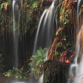 Water Fall by Sangram Jadhav - Nature Up Close Water ( water, leave, waterscape, fall, stone )