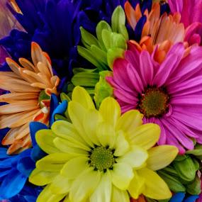 by Jolene Schack Dommer - Flowers Flower Arangements (  )