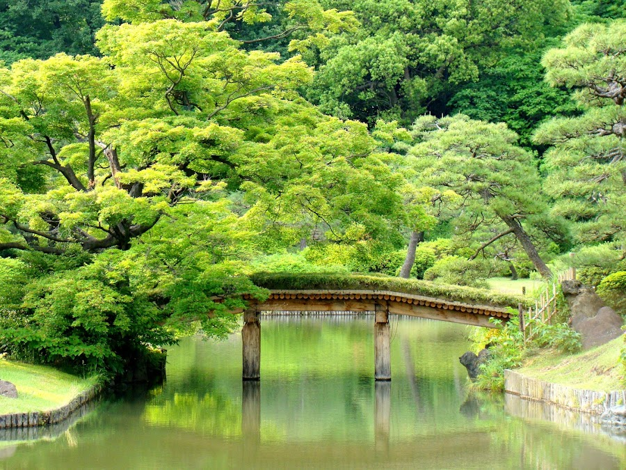 The Rikugien, beautiful Japanese garden in Tokyo, Japan. by Paolo Gianti - Travel Locations Landmarks ( rikugien; rikugi; en; tokyo; japan; asia; japanese; asian; garden; niwa; far; east; eastern; traditional; cultural; oriental; culture; history; old; relax; ceremony; art; day; green; trees; pond; water; lake; bridge; wood; wooden; rocks; reflection; maple; momiji; zen; tranquil; foliage; noble; cypress; park; hill; tourist; tourism; attraction; destination; travel; sightseeing; famous; yanagisawa; yoshiyasu; )