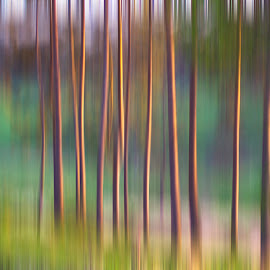 Tall trees at sunset by Karen Buttery - Abstract Patterns ( panning, nature, lighting, sunset, trees, intentional_blur )