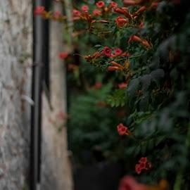 Flowers street by Ernesto Kolarić - City,  Street & Park  Neighborhoods ( street, dof, architecture, flowers, city )