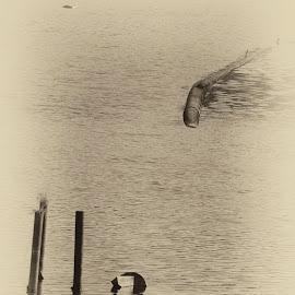 by Vince Davide - Black & White Objects & Still Life