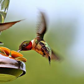 by Christine Warner - Animals Birds (  )