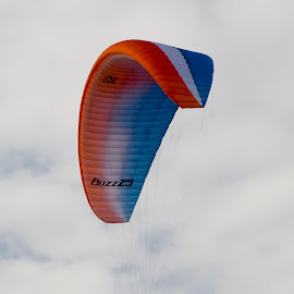 Hang Gliding by Steven Faucette - Sports & Fitness Other Sports ( mountains, window rock, tennessee, hang gliding )