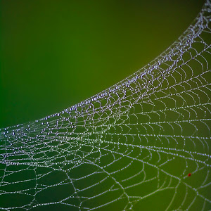 March 11 spider web.jpg