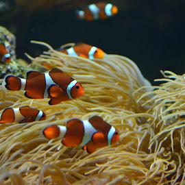 Fish by Darren Sutherland - Animals Fish ( stephanie*stuff )