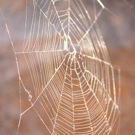 Struck down but Not abandoned... by Savannah Eubanks - Nature Up Close Webs