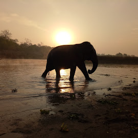 An elephant in the River by Chudamani Chaudhary - Uncategorized All Uncategorized