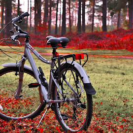 Bike in Swinley Forest by Ian Harvey-Brown - Transportation Bicycles