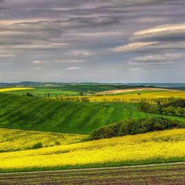 carpets exhibition by Darja Pavlacká - Landscapes Prairies, Meadows & Fields