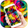 Rainbow Rose Color Flora Theme