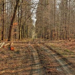 Březnový les by Vláďa Lipina - Landscapes Forests