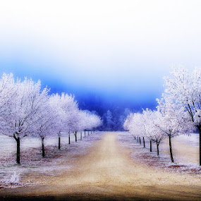 by Lidija P - Landscapes Forests (  )