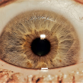 eye ball by Hamish Hamilton - People Body Parts ( ball, macro, eye, up, close )