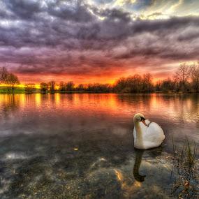 Dawn by Boris Frković - Landscapes Waterscapes ( water, dawn, swan, lake, dusk )