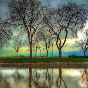 TREEFLECTIONS by Louis Perlia - Landscapes Waterscapes