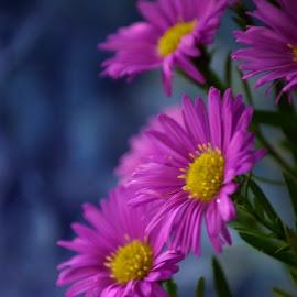 Flowers by Brenda Shoemake - Flowers Flower Arangements (  )