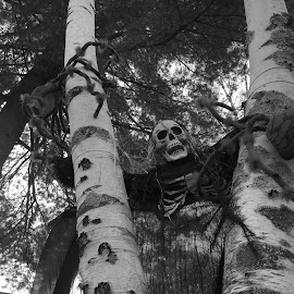 Creature in the Trees by Kristine Nicholas - Novices Only Objects & Still Life ( holiday, scary, skull, autumn, decoration, spooky, fall, trees, halloween )