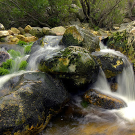 Rugged streams. by Daniel Peter Robertson - Landscapes Waterscapes