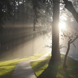 Foggy Walk! by Donald Casad - City,  Street & Park  Neighborhoods ( grass, fog, trees, walk, sidewalk )