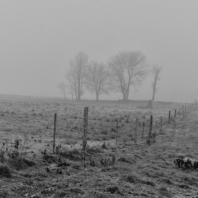 Lonely Trees Awaiting the Herd by Nathaniel Bennett - Landscapes Prairies, Meadows & Fields ( field, fence, fog, trees, pwcbwlandscapes )