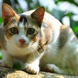 by Sambit Bandyopadhyay - Animals - Cats Portraits