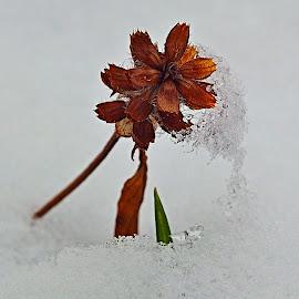pod sněhem by Vláďa Lipina - Nature Up Close Other plants