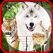 Hunting Animals & Birds Icon