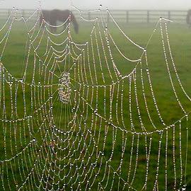 Irish National Stud Horsepark, Kildare, Ireland by Deborah Stuckey - Animals Horses ( foggy, horses, dew, web, morning dew )