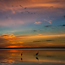 Coming home to roost by Joe Saladino - Landscapes Sunsets & Sunrises ( water, sunset, lake, birds, sandhill cranes )