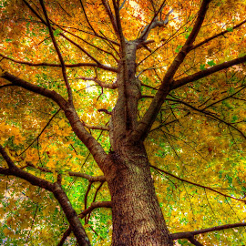 looking up by Fraya Replinger - Nature Up Close Trees & Bushes ( orange, nature, tree, green, yellow )
