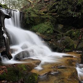 Upper Mill Creek Falls by Tim Devine - Nature Up Close Water ( water, winter, mason-dixon trail, waterfall, pennsylvania, upper mill creek falls )