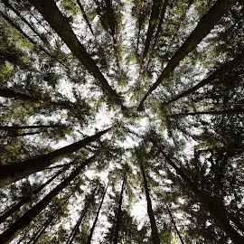 Looking up by Jessica Horn - Landscapes Forests ( canon, nature, bavaria, wide angle, forest, bayern, germany, scruffybread, landscape )