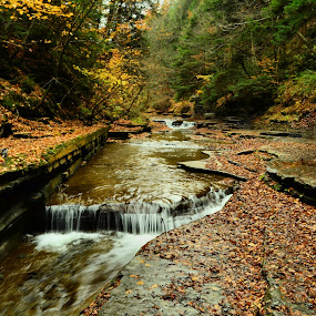 Small water fall in a creek bed by Jim Davis - Landscapes Waterscapes ( water, waterfalls, fall colors, autumn, creek, leaves )