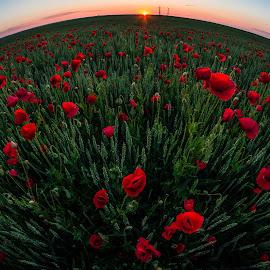 sunset, poppies & grain. by Lupu Radu - Landscapes Prairies, Meadows & Fields ( field, fisheye, dobrogea, sunset, grain, poppies )